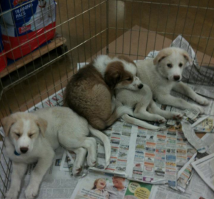 PetSmart puppies